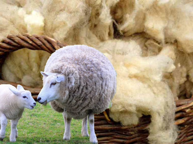 Шерстяная ткань: теплее не бывает